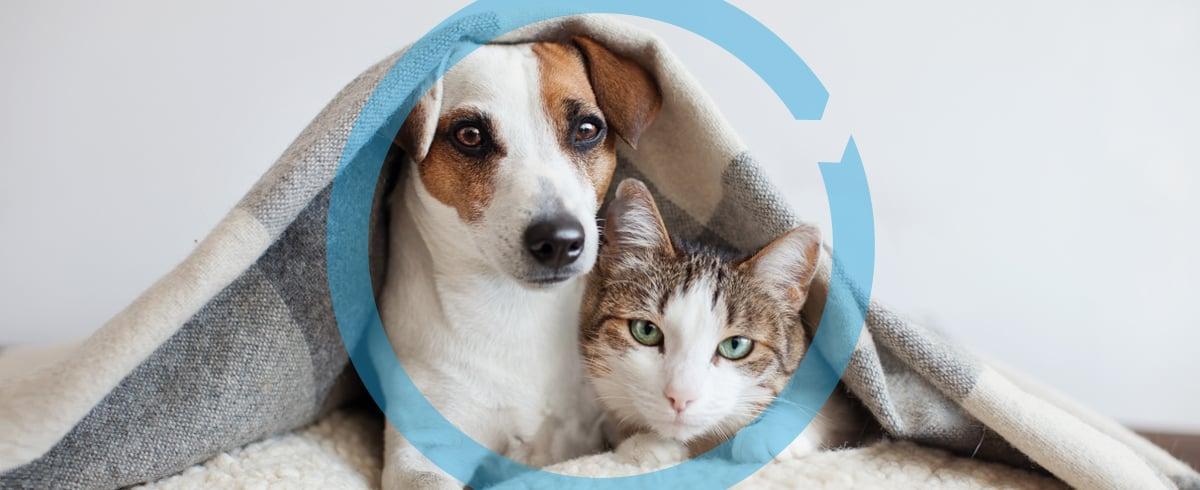 Pets_1200x490_7-20-21
