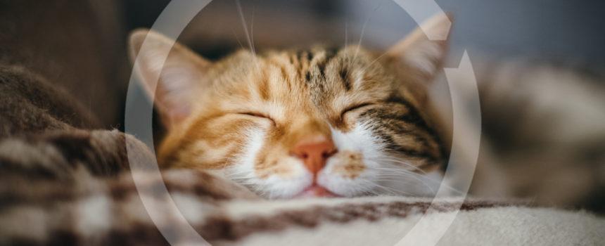 sleeping cat with NCS Chevron